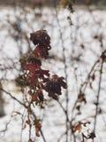 Wintergarden στοκ εικόνες