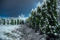 Wintergarden в раннем утре Стоковое фото RF
