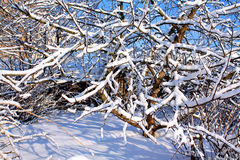 Wintergarden Royalty-vrije Stock Foto's