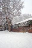 Wintergarden Imagem de Stock