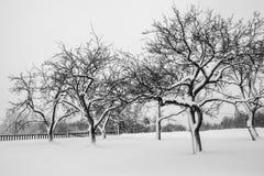 Wintergarden Royalty-vrije Stock Foto