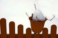 Wintergarden Fotos de Stock