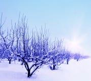 Wintergarden Royalty-vrije Stock Afbeelding