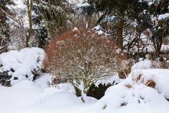 Wintergarden bonito coberto pela neve imagem de stock