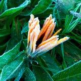 Wintergarden Walk_10 arkivbilder