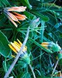 Wintergarden Walk_11 fotografering för bildbyråer
