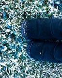 Wintergardenen går royaltyfri bild