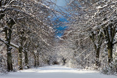 Wintergasse Stockfotografie
