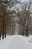 Wintergasse in der Pushkin-Stadt, Stockfotos