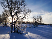 Wintergebirgsbirke Lizenzfreie Stockfotografie