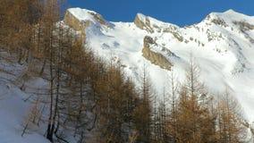 Wintergebirgswald stock video footage