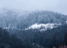 Wintergebirgswald Lizenzfreie Stockbilder