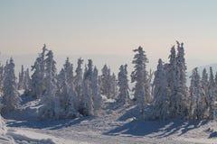 Wintergebirgswald im Schnee Stockfotografie