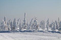 Wintergebirgswald im Schnee Lizenzfreies Stockfoto