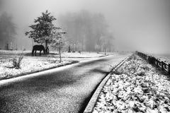 Wintergeschichte des Pferds stockfotografie