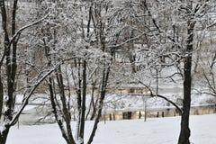 Wintergraphiken lizenzfreie stockbilder