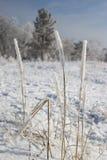 Wintergras Stockfotografie