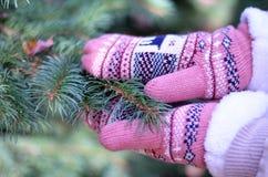 Winterhandschuhe und -fichte Lizenzfreies Stockfoto