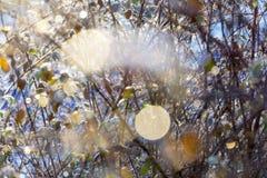 Winterhecke mit sonnigen Reflexionen stockfotografie