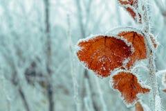 Winterherbst Stockfotos
