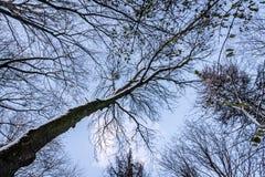 Winterhimmel in den Baumasten Stockfotografie