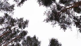 Winterhimmel im Wald Lizenzfreies Stockfoto