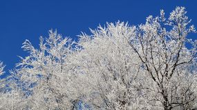 Winterhimmel und schneebedeckte Bäume Stockfotos