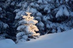 Winterhintergrund Lizenzfreie Stockfotos