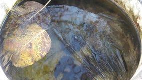 Winterhintergrund - Blätter oben eingefroren im Eisabschluß, Makro lizenzfreie stockfotos
