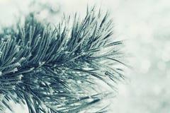 Winterhintergrund der grünen Kiefernniederlassung im Schnee und des Frosts an einem kalten Tag Orange Blüten-Blume in der Makrofo Stockfotos