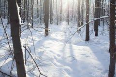 Winterhintergrund des schneebedeckten Waldes Stockbilder