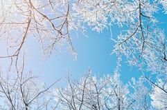Winterhintergrund - eisige Niederlassungen der Winterbäume gegen blauen Himmel Russland, UralJanuary, Temperatur -33C Lizenzfreie Stockfotos