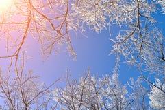 Winterhintergrund - eisige Niederlassungen der Winterbäume gegen blauen Himmel Russland, UralJanuary, Temperatur -33C Lizenzfreies Stockfoto