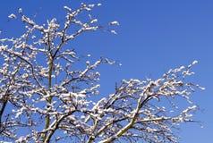 Winterhintergrund - eisige Niederlassungen des Baums auf dem Hintergrund des blauen Himmels Schließen Sie oben von Schnee umfasst Stockbilder
