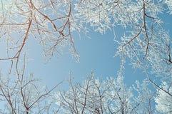 Winterhintergrund - eisige Winterniederlassungen der Winterbäume gegen blauen Himmel Russland, UralJanuary, Temperatur -33C Lizenzfreie Stockfotografie