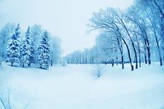 Winterhintergrund, Landschaft Winterbäume im Märchenland Winter Lizenzfreies Stockfoto