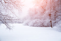 Winterhintergrund, Landschaft Winterbäume im Märchenland Winter Stockbilder