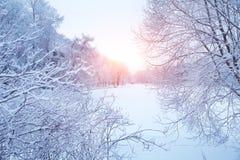 Winterhintergrund, Landschaft Winterbäume im Märchenland Winter Stockfotos
