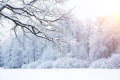 Winterhintergrund, Landschaft Winterbäume im Märchenland Winter Lizenzfreie Stockbilder