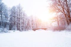 Winterhintergrund, Landschaft Winterbäume im Märchenland Winter Lizenzfreie Stockfotografie