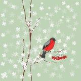 Winterhintergrund mit Bullfinch vektor abbildung