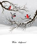 Winterhintergrund mit Bullfinch lizenzfreie abbildung