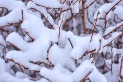 Winterhintergrund mit einem eisigen Busch stockbild