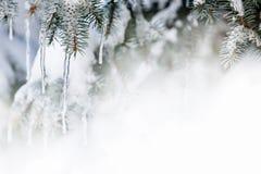 Winterhintergrund mit Eiszapfen auf Tannenbaum Lizenzfreies Stockfoto