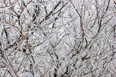 Winterhintergrund mit Frost lizenzfreies stockfoto