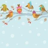 Winterhintergrund mit lustigen Vögeln. Stockfoto