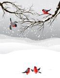 Winterhintergrund mit Vögel Bullfinch lizenzfreie abbildung