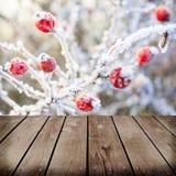 Winterhintergrund, rote Beeren auf den gefrorenen Niederlassungen Lizenzfreies Stockfoto