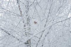 Winterhintergrund - Vogel auf einem weißen eisigen Baum Stockfotografie