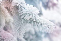 Winterhintergrund - weißer eisiger Tannenzweig Stockbild